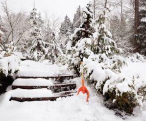 Радісна новина! Синоптики повідомили новий прогноз погоди, невже ми дочекаємося справжньої зими?