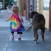 Тільки з намордником та повідком: франківець подав петицію до влади про вигул собак