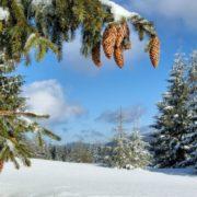 Потеплішає не скоро: Наталка Діденко попередила українців про серйозне посилення морозів