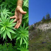 Франківець заявив поліцейським, що знайшов марихуану на Вовчинецьких горах