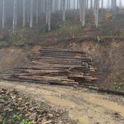 На Прикарпатті гектарами знищують ліс – версія Нацдружинників