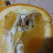 У Яремче чоловік придбав апельсини з хробаками (фото)