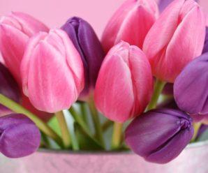 Канікули для всіх: скільки днів українці відпочиватимуть у березні