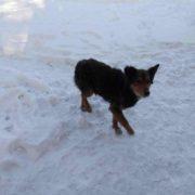Помста за тварин: запорожець вбив чоловіка, який покалічив собак (18+)