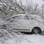 На Чорновола повалене дерево розтрощило кросовер КІА «Sportage»