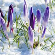 Морози до кінця березня: синоптики нaлякaли українців дуже холодною весною