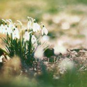 Весна вже в дорозі: головний синоптик України розповів, коли закінчаться морози і снігопади