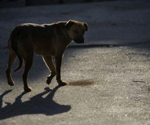 В Івано-Франківську близько 500 мешканців звернулися до лікарні через укуси безпритульних тварин