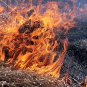 Прикарпатці масово спалюють суху страву