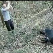 Франківські волонтери показали відео, як молодики жорстоко забивають кабана. ВІДЕО