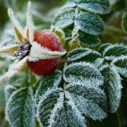 Прикарпатців попереджають про заморозки