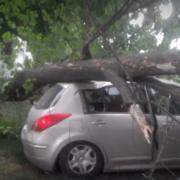 У Івано-Франківську на авто з двома людьми в салоні впало дерево