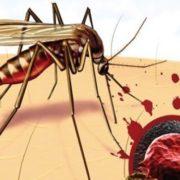 В Україні 11 людей захворіли на малярію, двоє померли