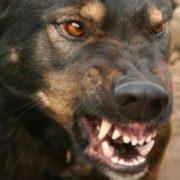 """""""Ворогові не побажаю пережити …"""": Зграя бродячих собак напала на матір з дитиною"""