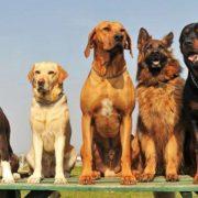 Собаки стануть новою загрозою для людства, – вчені