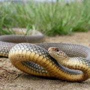 30-річну прикарпатку, за палець руки, вкусила отруйна змія