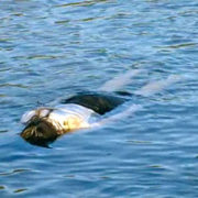 У річці Західний Буг знайшли труп жінки