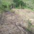 Масштаби  просто вpaжають: дрон зняв на відео суцільно зрубаний ліс на Закарпатті(відео)