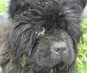 Волонтери забрали собаку у священика, який залишив її гнити заживо