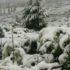 У Карпатах неочікувано випав сніг(фото)