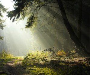 На Прикарпатті пенсіонер пішов в ліс і зник. Через кілька годин знайшли його тіло
