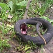 Прикарпатець потрапив до лікарні після укусу змії