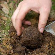 400 євро за 100 грамів: на Прикарпатті чоловік знайшов гриб вартістю як дорогоцінний камінь