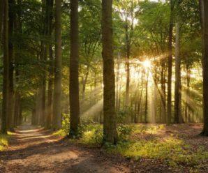 У лісі на Буковині знайшли зниклу півтора місяця тому мандрівницю з Німеччини