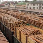 Україна експортує до ЄС незаконну деревину для постачальників Ikea і H&M – дослідники