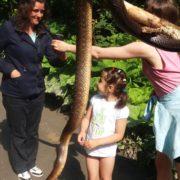 Дорогою на Піп Іван туристи знайшли червонокнижну змію