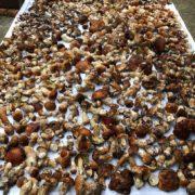На Івано-Франківщині рекорди збору урожаю грибів б'ються щодня. ФОТО/ВІДЕО