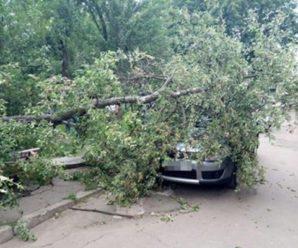У Коломийському районі на автомобіль впало дерево