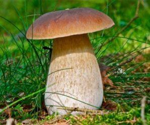 Для прикарпатки ласування грибами завершилося реанімацією