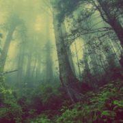 На Полтавщині 8-річний малюк всю ніч блукав у лісі, кликав на допомогу, але його ніхто не чув