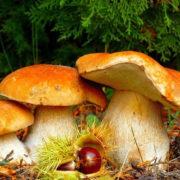За тиждень в Івано-Франківській області четверо людей отруїлись грибами