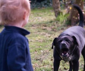 Поблизу під'їзду родячий собака вчепився в обличчя 4-річної дитини