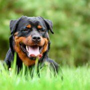 Собака напала на людей у парку і тепер її можуть забрати у власника(ФОТО)