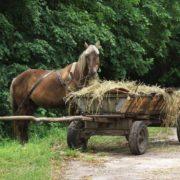 На Галичині чоловіки вкрали коня, щоб дістатися до магазину, який вирішили пограбувати