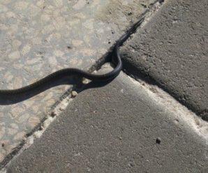 На Прикарпатті змія заповзла під холодильник в магазині