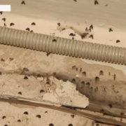 У Франківську багатоповерхівку заполонили комахи (відео)