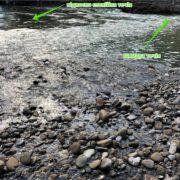 Франківців попереджають: Витягнули сьогодні з води двох дівчаток та декількох молодих людей(фотофакт)