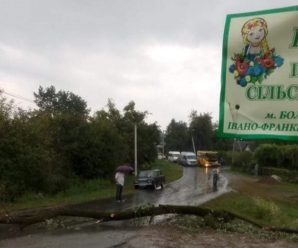 На Прикарпатті дорогу перекрили поваленим деревом (ФОТО)
