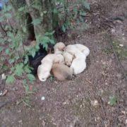 У Прикарпатському містечку невідомі викинули у лісі собаку та семеро цуценят (фотофакт)