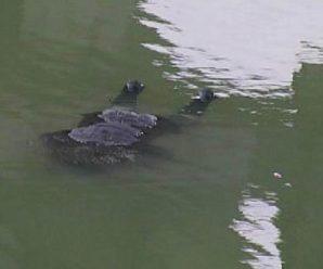 Жахлива знахідка: на Прикарпатті виявили в річці тіло чоловіка