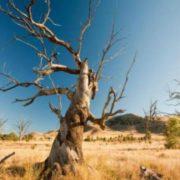 Зими не буде, ліси зникнуть: вчені приголомшили прогнозом щодо України