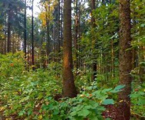 Пропав більше ніж тиждень тому: На Закарпатті знайшли українця, який загубився у лісі (фото)
