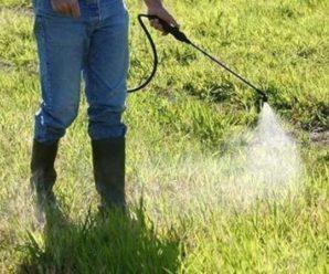 У Ямниці завтра хімікатами знищуватимуть бур'яни – селян просять бути обережними