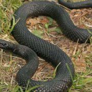 Після укусу змії житель Прикарпаття потрапив в реанімацію