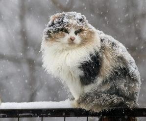На Прикарпаття сунуть заморозки та дощі з мокрим снігом