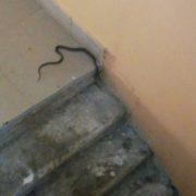 В багатоповерхівці Калуша люди виявили змію. ФОТО
